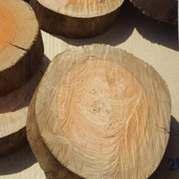 bandeja de tronco